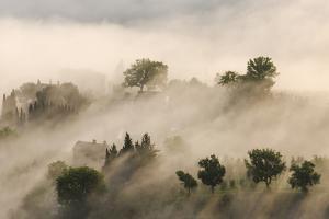 Italy, Tuscany. Morning Fog Drifting over Vineyards with Sun Breaking Through by Brenda Tharp