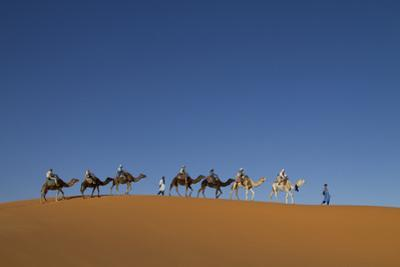 Morocco, Sahara. a Row of Camels Travels the Ridge of a Sand Dune by Brenda Tharp