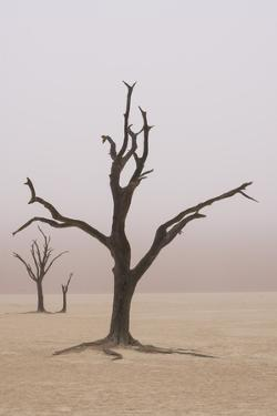 Namibia. Fog shrouds the dead acacia trees in Deadvlei, within Namib Naukluft National Park. by Brenda Tharp