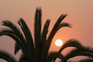 Namibia. Setting sun and a silhouetted palm tree, Swakopmund. by Brenda Tharp