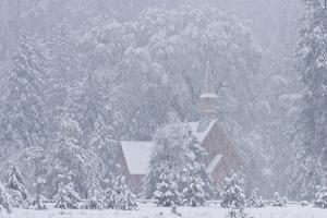 USA, California, Yosemite National Park. Yosemite Chapel in Snowstorm. by Brenda Tharp