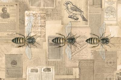 Academic Bee Illustration by Brenna Harvey