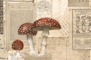 Academic Mushroom Illustration by Brenna Harvey