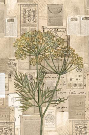 Academic Yellow Wildflower Illustration by Brenna Harvey