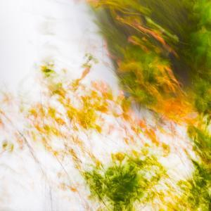 USA, Oregon, Columbia River Gorge area. Fall Color Abstractions. by Brent Bergherm