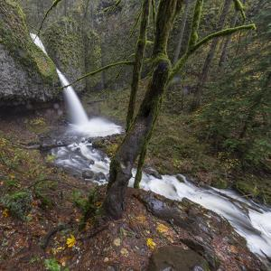 USA, Oregon, Columbia River Gorge area, ponytail falls. by Brent Bergherm