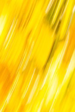 Walla Walla, Washington State. USA. Abstract fall colors at Walla Walla's Pioneer Park. by Brent Bergherm