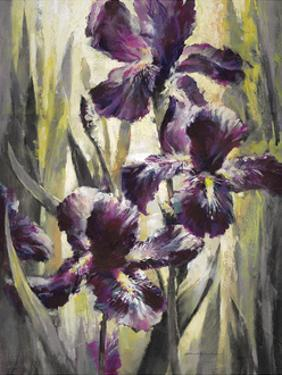 Ambient Iris 1 by Brent Heighton