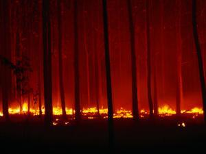 Forest Floor Fire in Teak Plantation, Playa Negra, Costa Rica by Brent Winebrenner