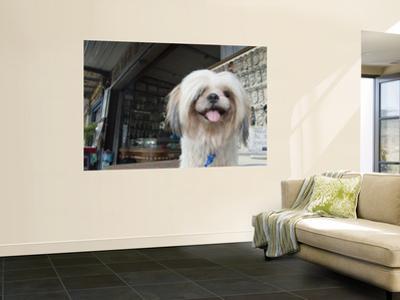 Pet Dog by Brent Winebrenner