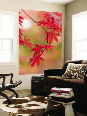 Red Maple Leaves at Okochi-Sanso Villa Teahouse and Gardens by Brent Winebrenner