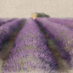 Lavender Field by Bret Staehling