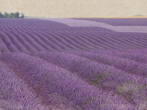 Lavender on Linen 1 by Bret Staehling