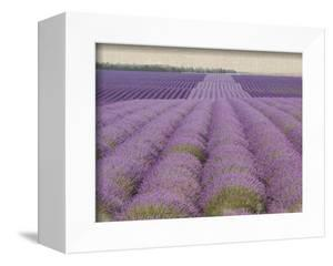 Lavender on Linen 2 by Bret Staehling