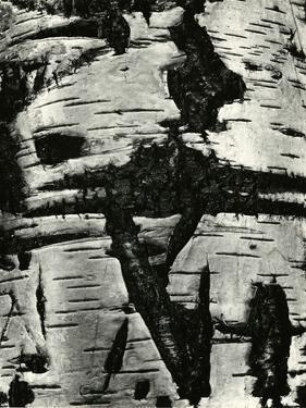 Bark Abstraction, Europe, 1971 by Brett Weston