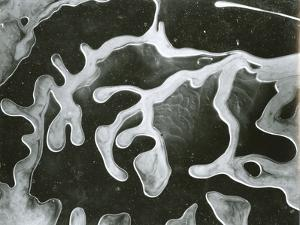 Broken Glass, California, 1954 by Brett Weston