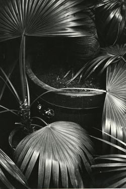 Bronx Botanical Garden, Bronx, New York, 1943 by Brett Weston