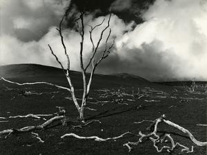 Clouds, Lava, Tree, Hawaii, 1978 by Brett Weston