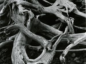 Dead Tree, c. 1970 by Brett Weston
