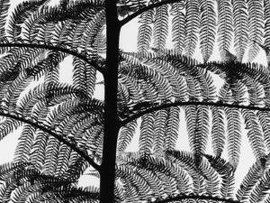 Fern, California, 1954 by Brett Weston