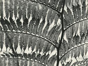 Fern, California, 1956 by Brett Weston