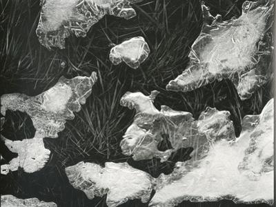 Ice and Grass, High Sierra, California, c. 1950 by Brett Weston