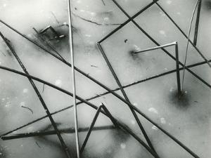 Ice and Reeds, California, 1962 by Brett Weston