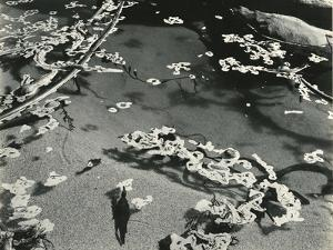Kelp and Water, Garrapata, 1951 by Brett Weston
