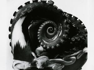 Octopus Tentacles, c. 1980 by Brett Weston