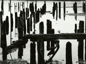 Pier Piles, Oregon, 1967 by Brett Weston