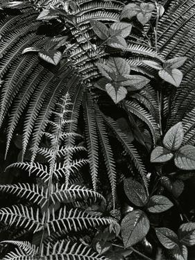 Plants and Leaves, Hawaii, c. 1985 by Brett Weston