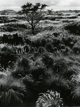 Plants and Trees, Landscapes, c. 1980 by Brett Weston