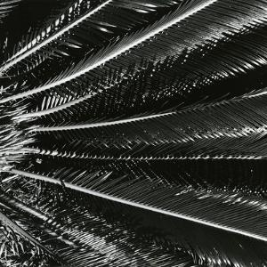 Plants, Hawaii, c. 1985 by Brett Weston