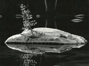 Pond, High Sierra, California, 1972 by Brett Weston
