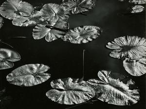 Pond with Lily Pads, Europe, 1968 by Brett Weston