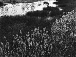 Roadside Pond, California, c. 1970 by Brett Weston
