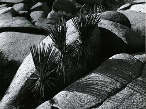 Rock and Plants, Death Valley, California, 1978 by Brett Weston