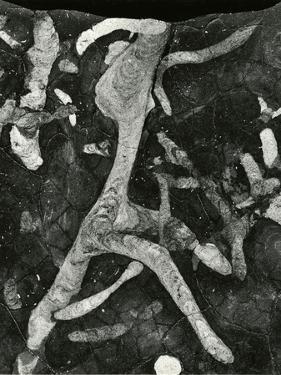 Rock Formation, 1966 by Brett Weston