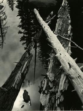 Sierra Pond, California, 1955 by Brett Weston