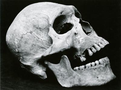 Skull Profile, 1952