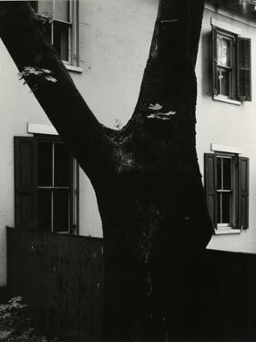 Tree and Building, 1960 by Brett Weston