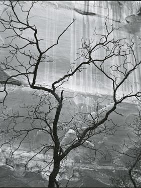 Tree and Rock Wall, Glen Canyon, 1959 by Brett Weston