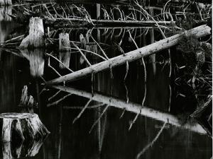 Tree and Water, High Sierra, c.1970 by Brett Weston