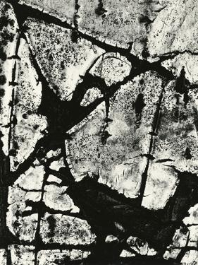 Tree Bark, 1970 by Brett Weston