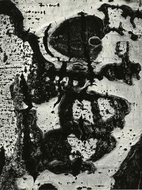 Tree Bark, 1972 by Brett Weston
