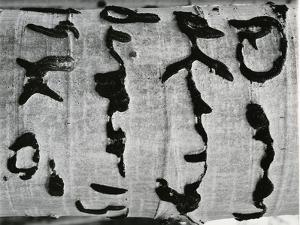 Tree Bark, c. 1970 by Brett Weston