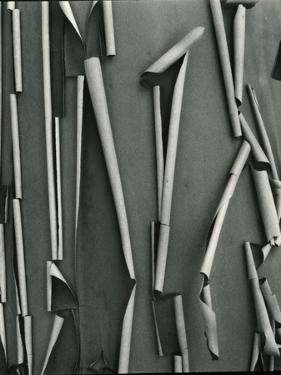 Tree Bark, c.1975 by Brett Weston