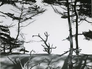 Trees and Dune, Oregon, 1962 by Brett Weston
