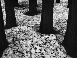 Trees and Snow, Yosemite, 1950 by Brett Weston