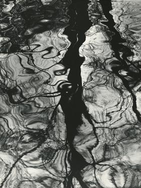 Trees, Water, Reflections, Holland, 1973 by Brett Weston